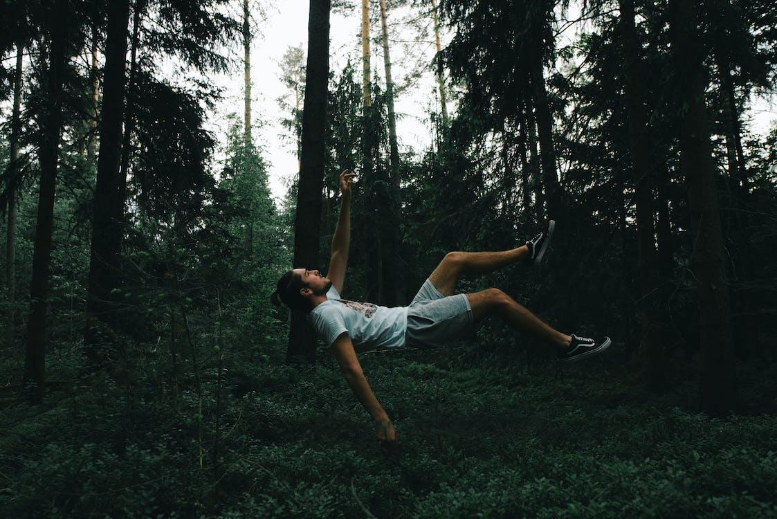 balanceren, balans, bomen