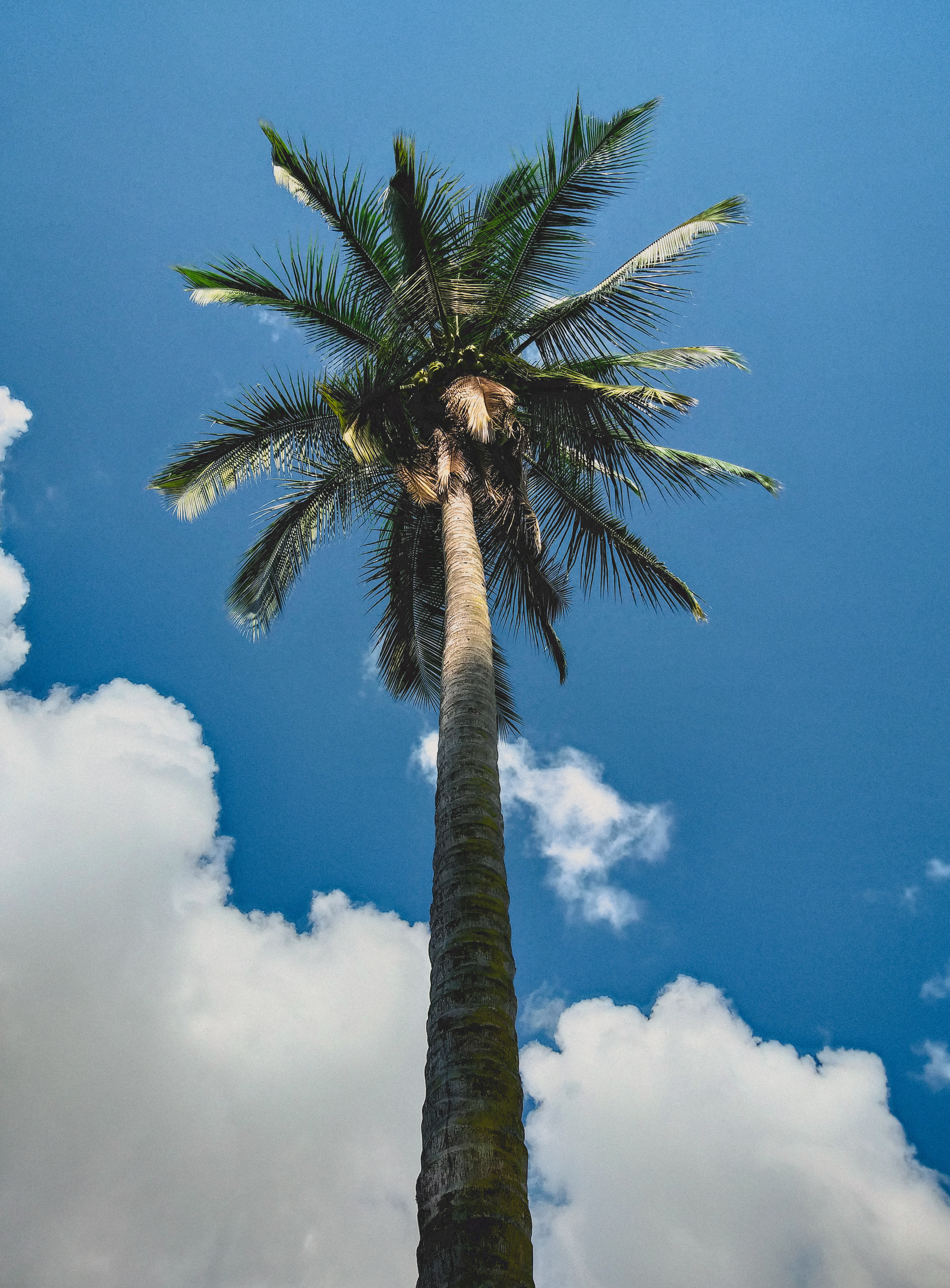 Low angle photography of coconut palm tree under blue sky