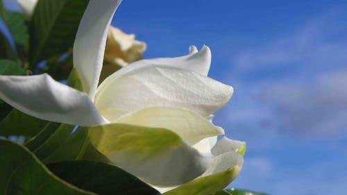 Ảnh lưu trữ miễn phí về vườn hoa