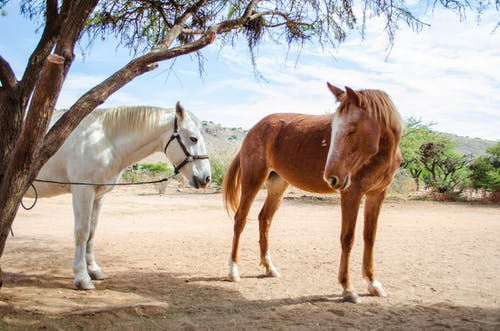 Photo of White and Brown Horses Standing Under Tree