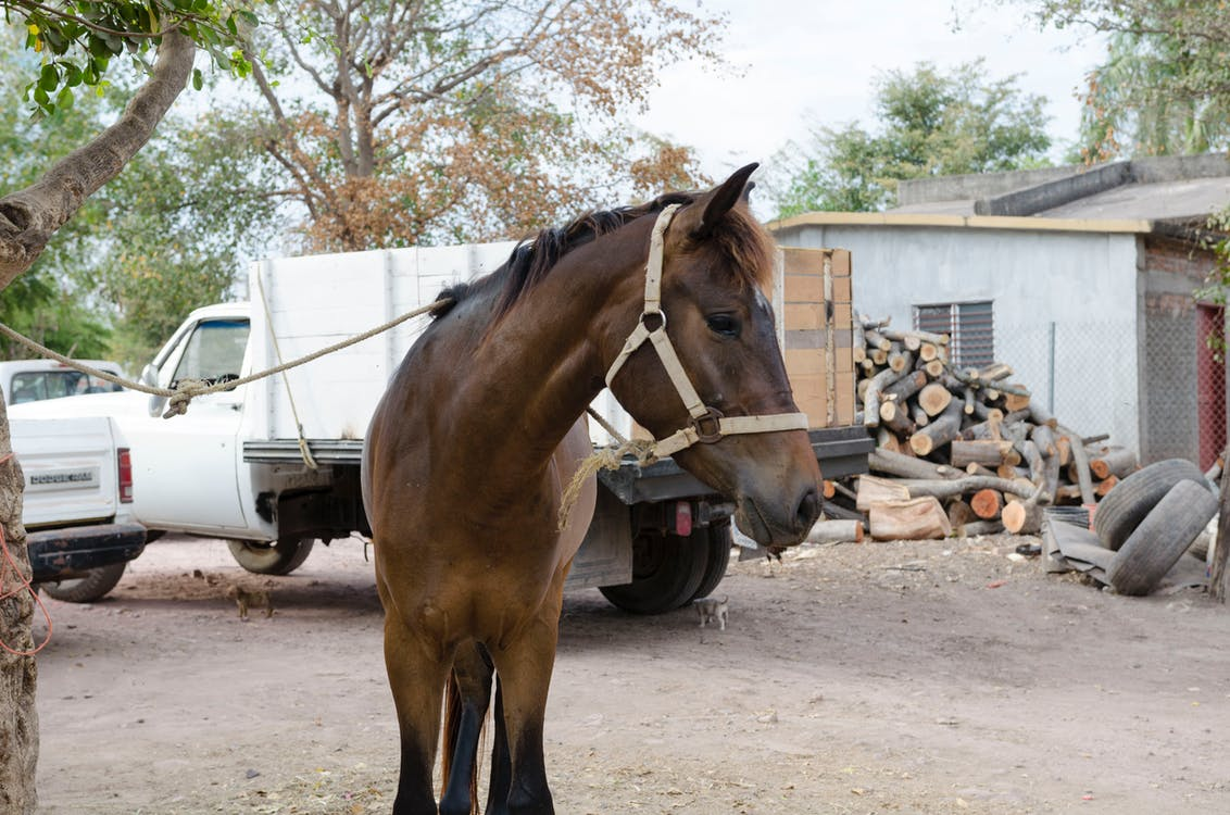 animal, caballería, caballo
