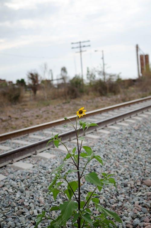 기차 선로, 기찻길, 꽃 나무, 철도의 무료 스톡 사진
