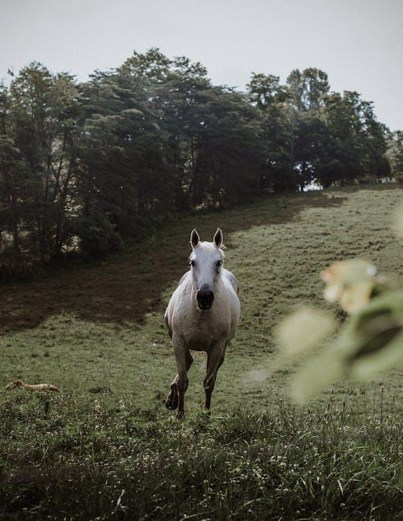 Photo of White Horse Running in Grass Field
