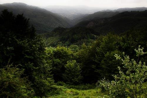 Gratis arkivbilde med 4k-bakgrunnsbilde, bartrær, blader, fjell