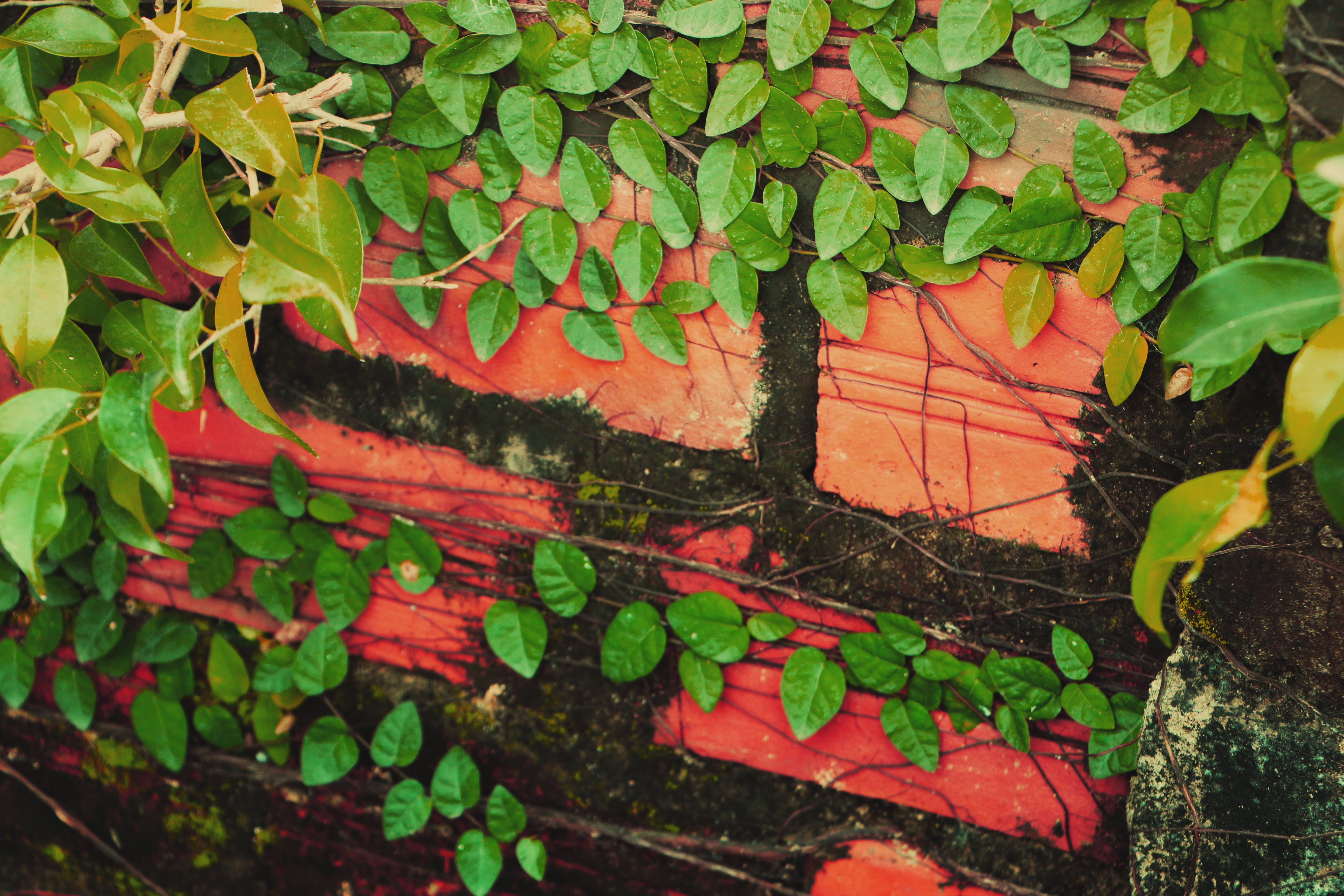 Close-up of Ivy Growing on Plant