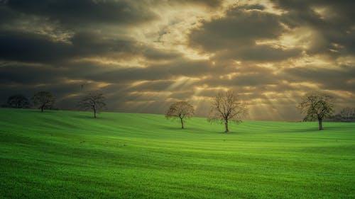 Ảnh lưu trữ miễn phí về bầu trời đầy kịch tính, bình minh, cánh đồng, cây