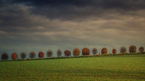 Ảnh lưu trữ miễn phí về bầu trời, cánh đồng, cây, cỏ