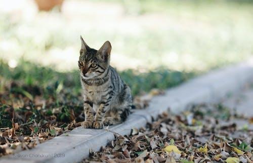 Imagine de stoc gratuită din cu dungi, feline, pisica pe ramb, pisicuță
