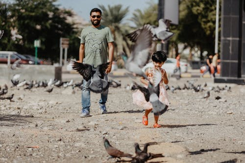 Man and Toddler Walking Near Birds