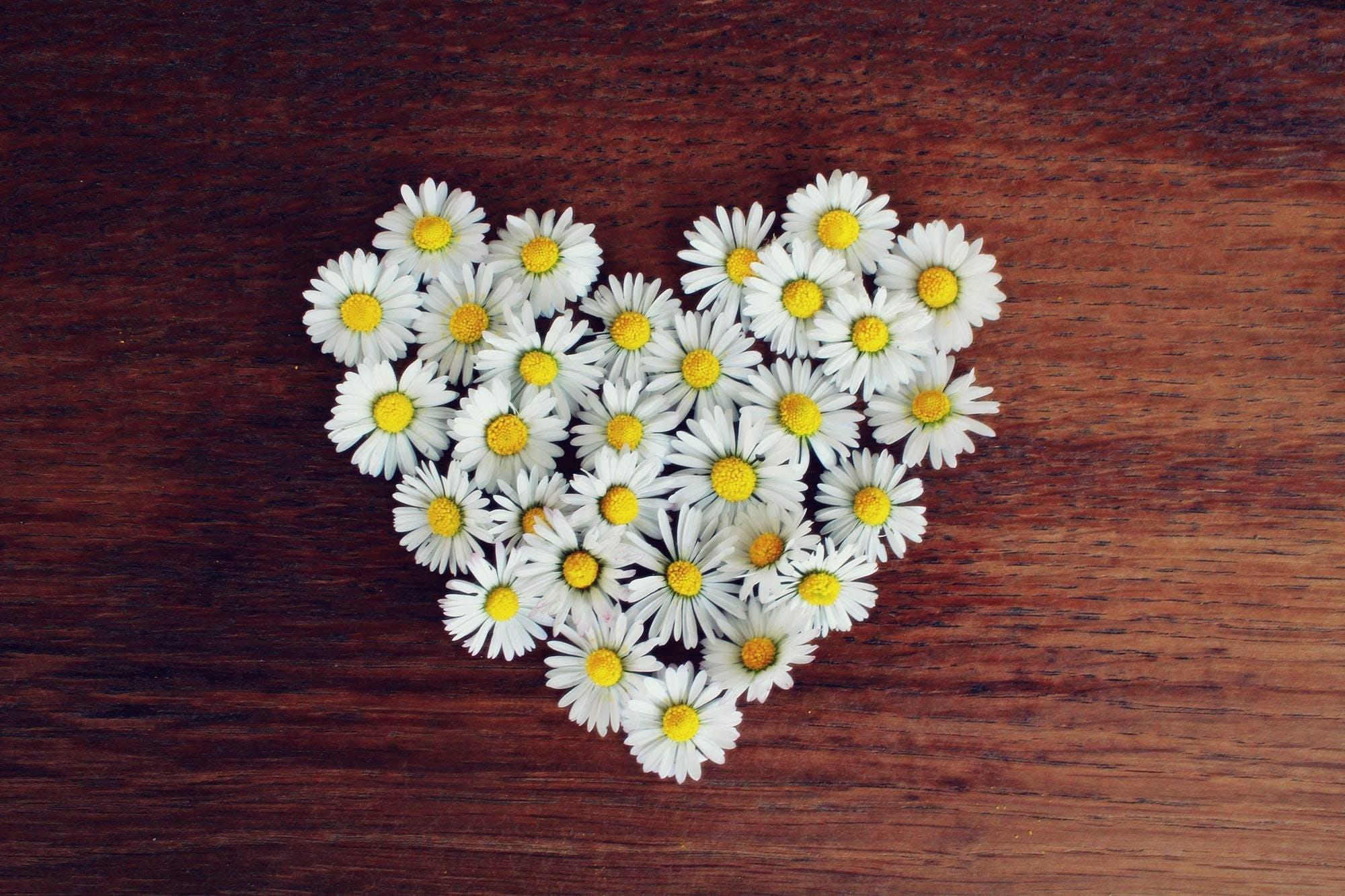 Daisy Flowers on Table