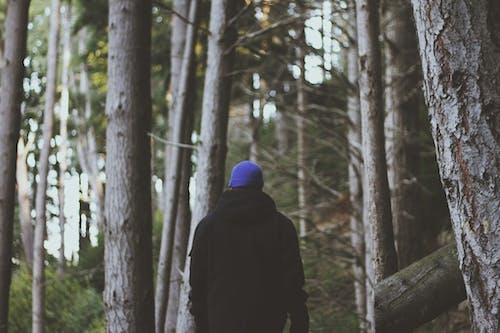 Ingyenes stockfotó divat, erdő, esés, évszak témában