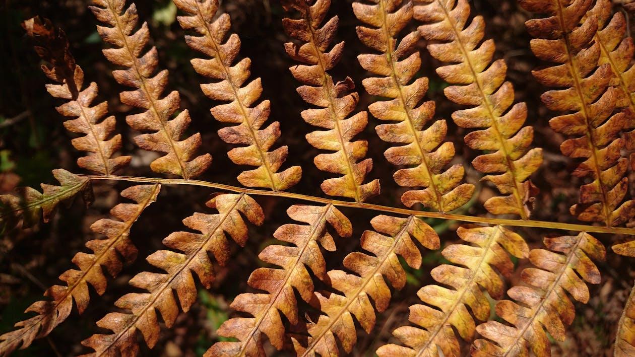 가을, 양치식물, 잎사귀