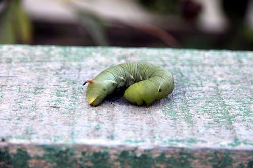 곤충, 애벌레의 무료 스톡 사진