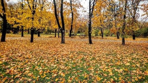 가을, 공원의 무료 스톡 사진