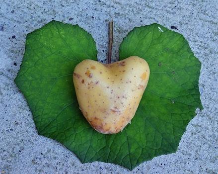 High Angle View of Heart Shape Leaf