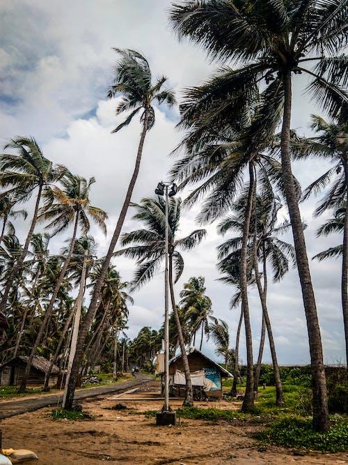 Бесплатное стоковое фото с деревья, домик, идиллический, кокосовые пальмы