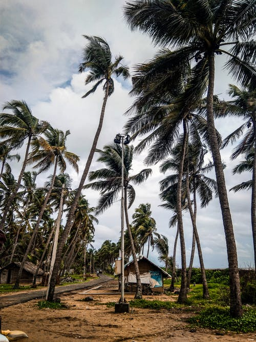 Základová fotografie zdarma na téma chýše, idylický, klidný, kokosové palmy