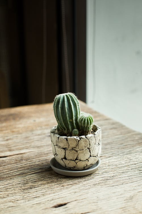 Photo Of Cactus Plant On Top Of The Table