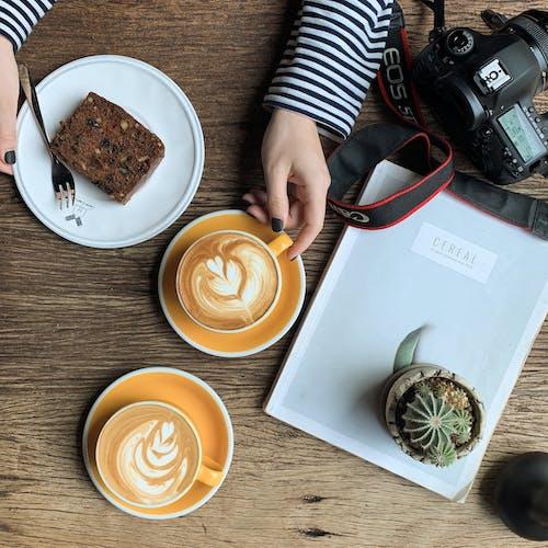 仙人掌, 俯視圖, 健康, 健康食品 的 免費圖庫相片