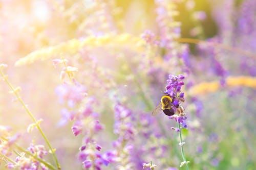 Foto profissional grátis de abelha, alimentando, asas, atraente
