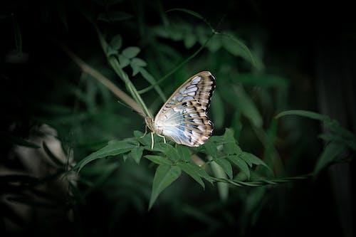 Foto d'estoc gratuïta de ales, animal, animal salvatge, biologia
