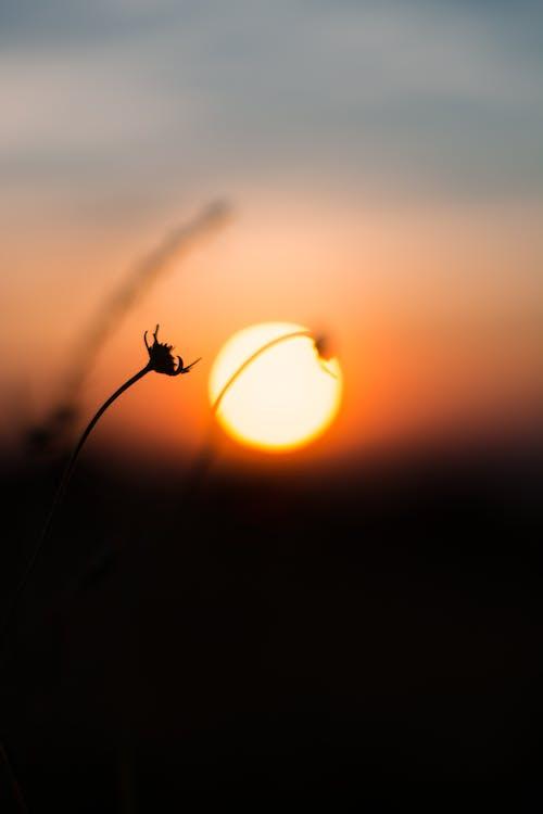 #日落 的 免費圖庫相片