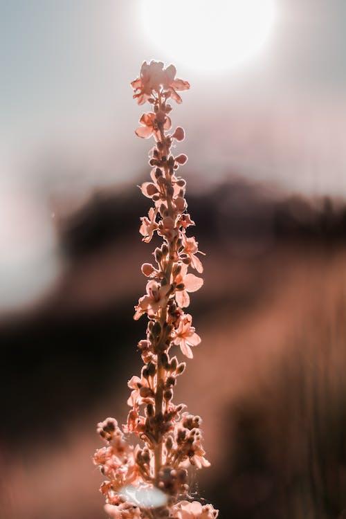alan derinliği, bitki, bitki örtüsü, bokeh içeren Ücretsiz stok fotoğraf
