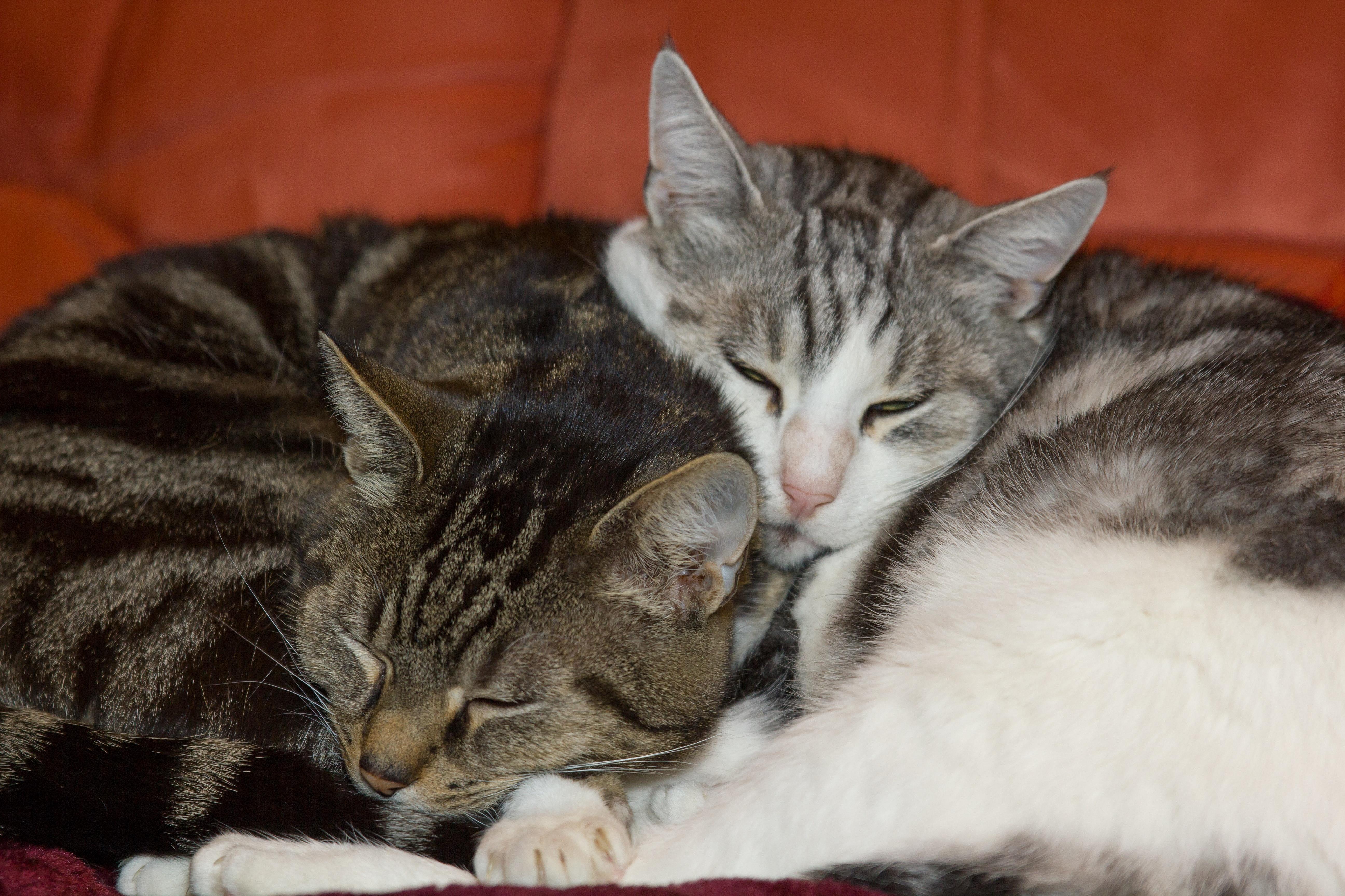 e9b3562cd32f Δωρεάν στοκ φωτογραφιών με αγάπη για τα ζώα