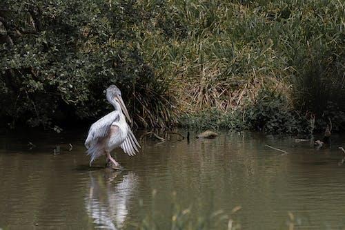Základová fotografie zdarma na téma divočina, divoký, fotografování zvířat, mokřina