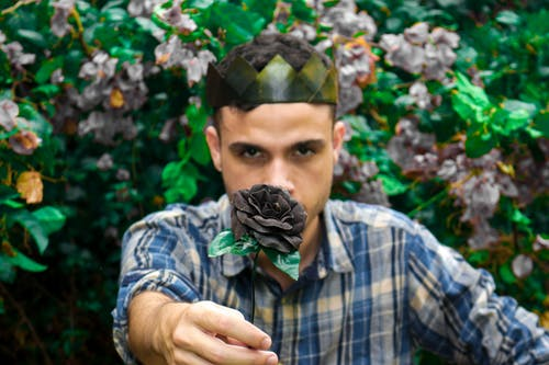Gratis stockfoto met gozers, koning, natuur, zwarte roos