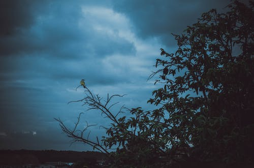 Photo of Tree Under Cloudy Sky
