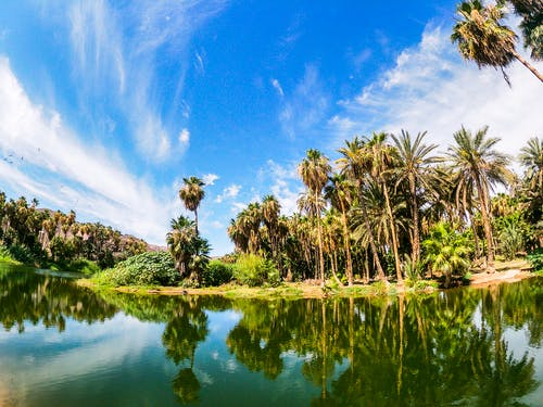 Imagine de stoc gratuită din apă curgătoare, arbori, cocotieri, palmieri