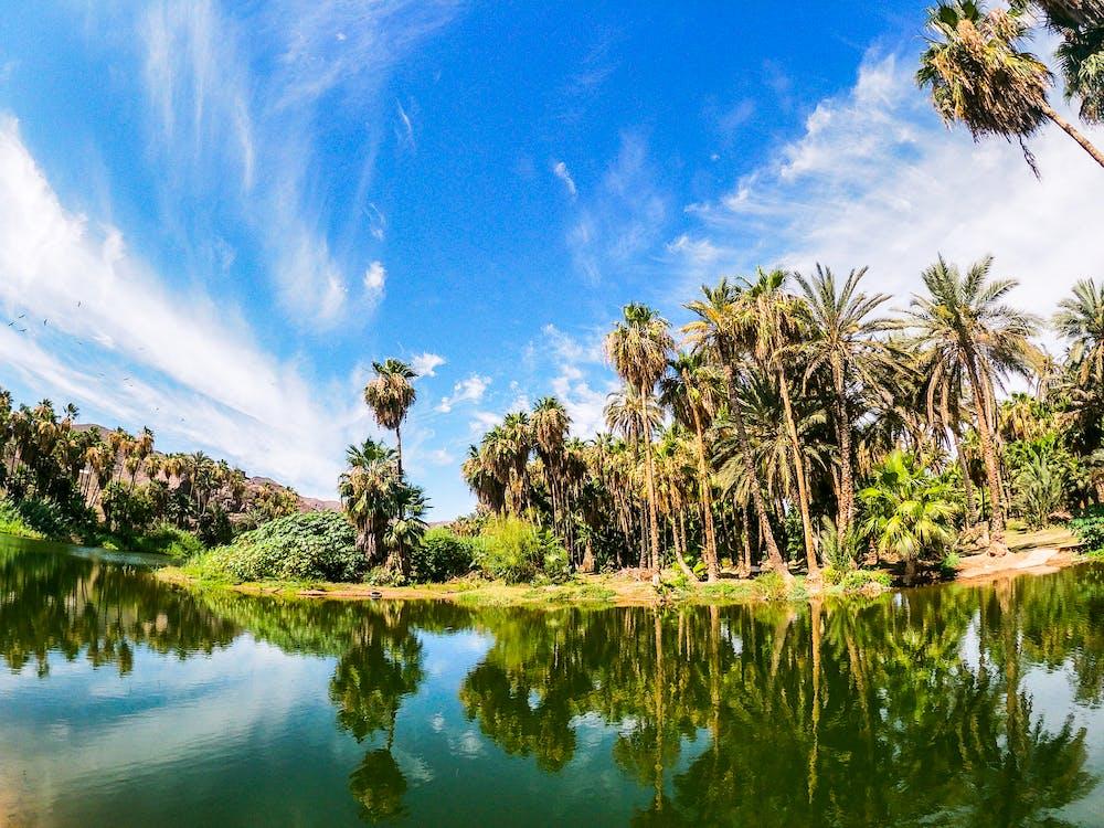 kokosové palmy, odraz, palmy