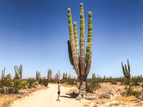 Photo of Man Standing Near Cactus
