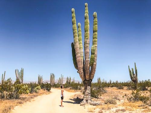Foto stok gratis alam, di luar rumah, gersang, gurun pasir