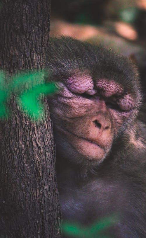 Fotobanka sbezplatnými fotkami na tému divé zviera, divočina, primát, roztomilý