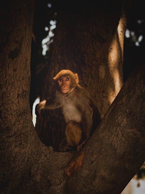 Základová fotografie zdarma na téma divočina, fotografování zvířat, makak, zvíře