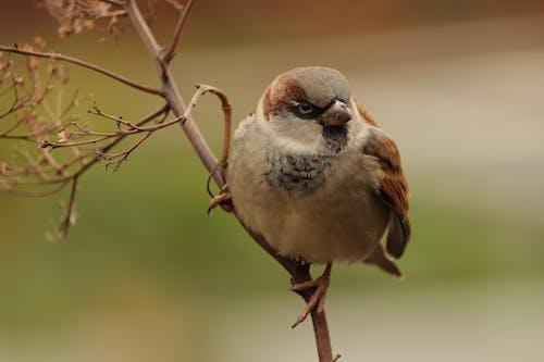Ilmainen kuvapankkikuva tunnisteilla vogel