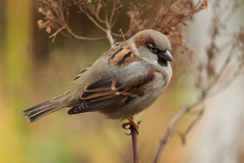 Sparrow Bird Close-up Photography