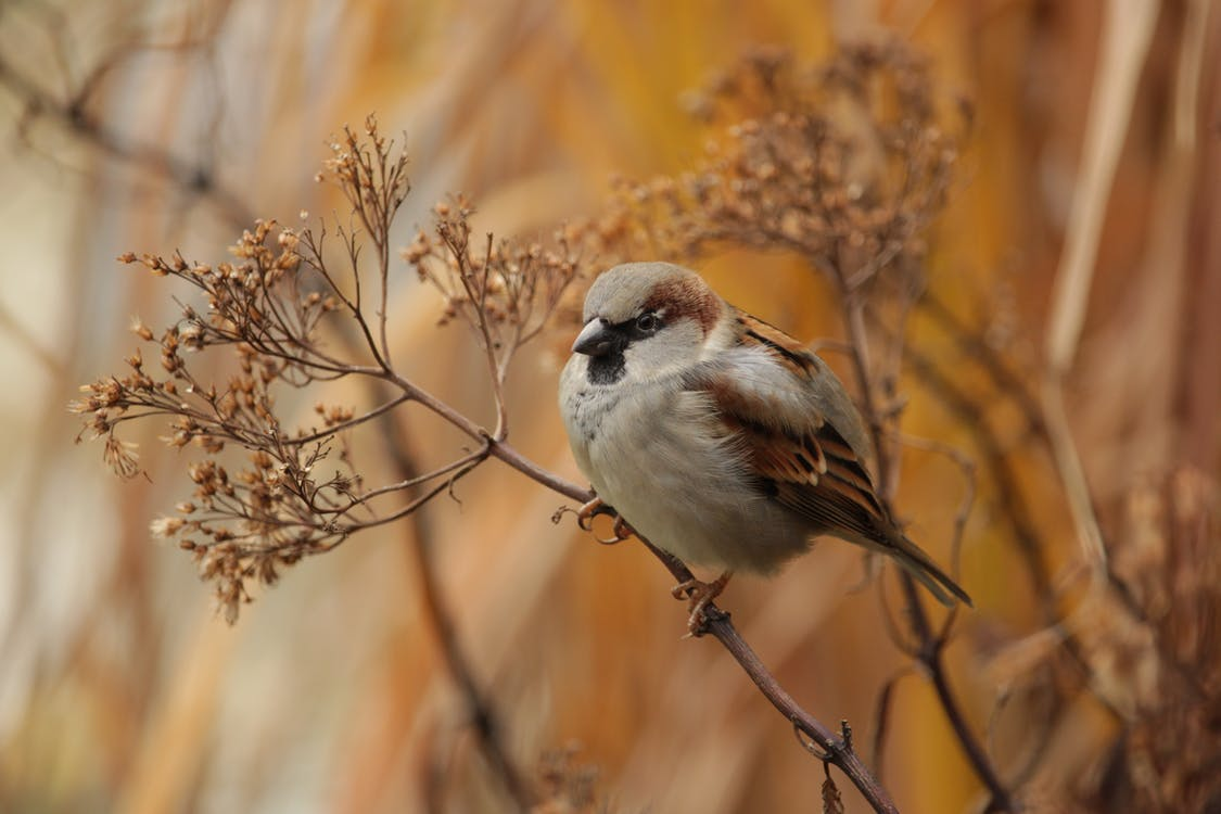 Close-Up Photo of Brown Bird