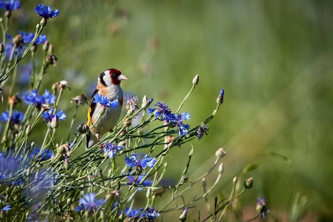 Focus Photography Of A Bird