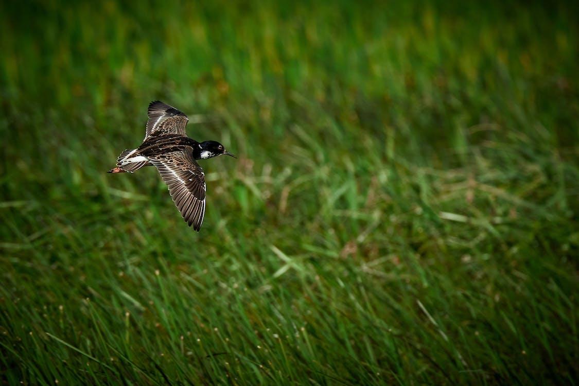 animale, campo, colibrì