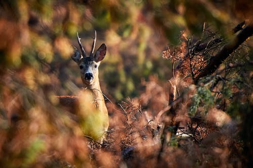Selective Focus Photography of Deer