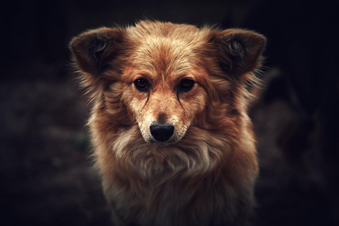 adorabile, animale, animale domestico