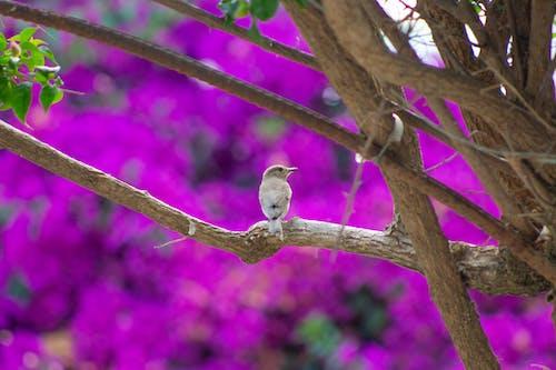 Foto d'estoc gratuïta de au, au enredant, festiu, observació d'aus