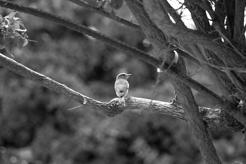 Foto d'estoc gratuïta de au enredant, blanc i negre, festiu, observació d'aus