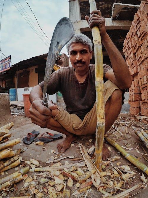 Δωρεάν στοκ φωτογραφιών με ανθρώπινος, δουλειά, ζάχαρη, λειτουργία πορτρέτου