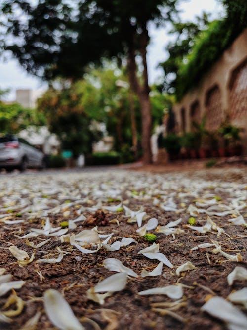 Δωρεάν στοκ φωτογραφιών με δέντρα, δρόμος, λουλούδια, νωρίς το πρωί