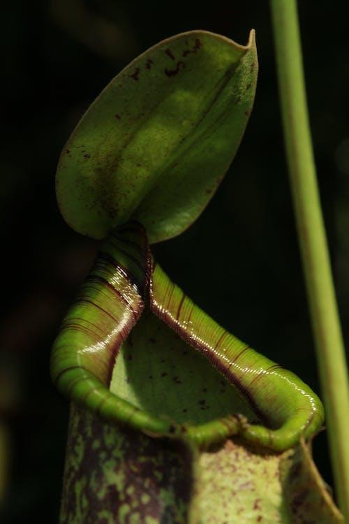 Ilmainen kuvapankkikuva tunnisteilla hauras, kasvi, kasvu, kukka