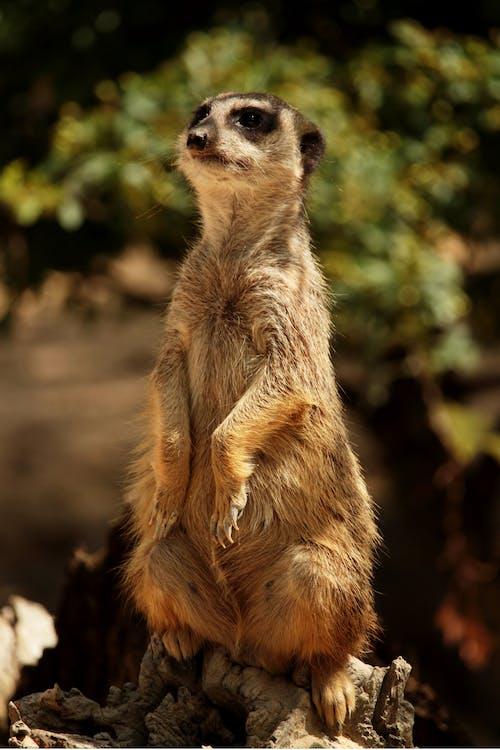 Fotos de stock gratuitas de animal, animal salvaje, bokeh, concentrarse